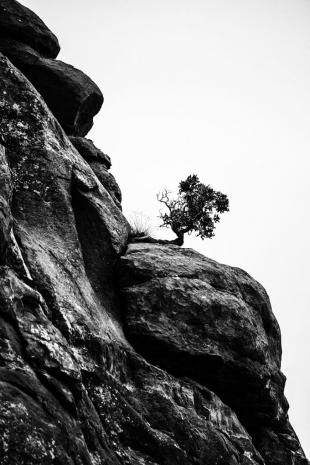 Arizona #72