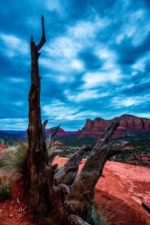 Arizona #74