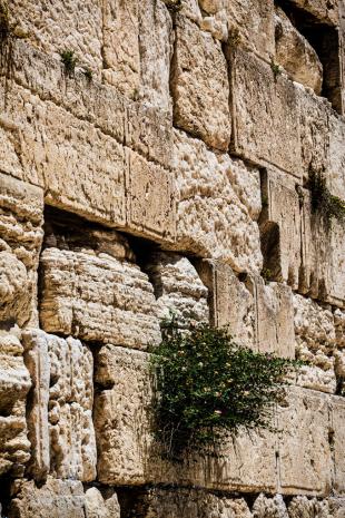 Israel #182