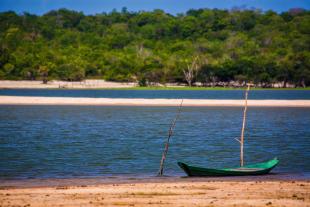 Amazonia #133