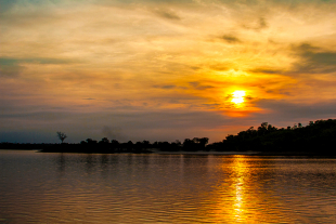 Amazonia #121