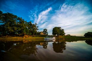 Amazonia #125