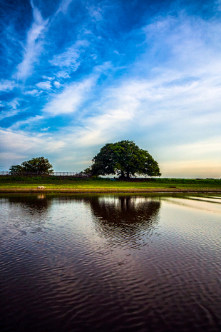 Amazonia #124