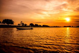 Amazonia #120