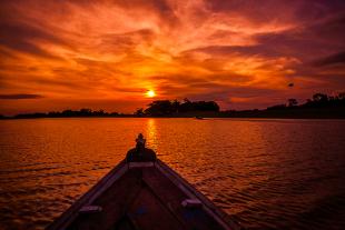 Amazonia #119