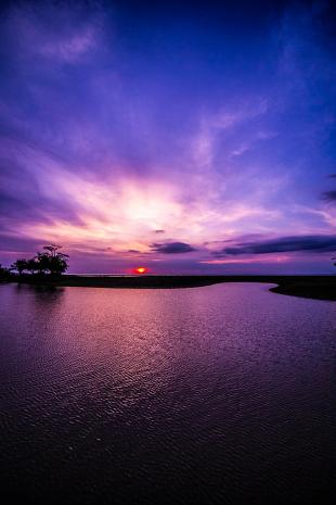 Amazonia #118