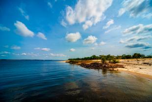 Amazonia #116
