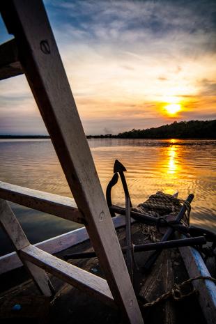 Amazonia #115