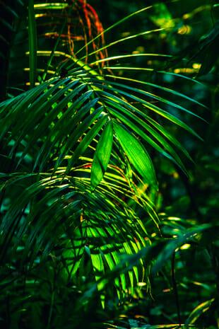 Amazonia #108