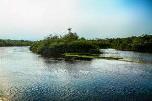 Amazonia #106