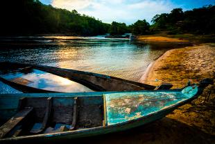 Amazonia #105