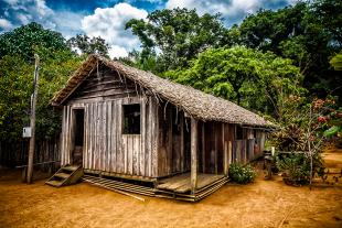 Amazonia #103