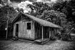 Amazonia #102