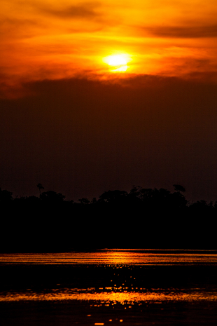 Amazonia #97