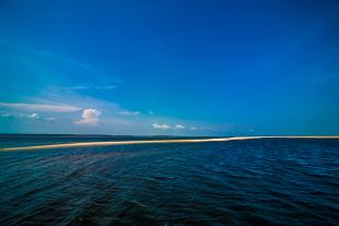 Amazonia #96
