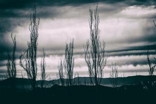 Vale Nevado #7