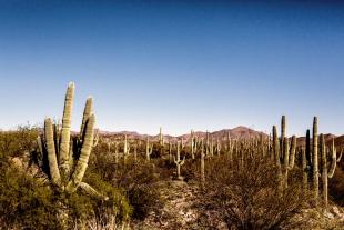 Arizona #130