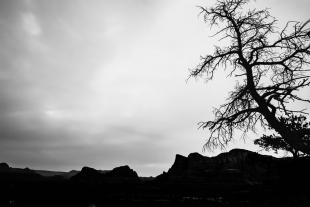 Arizona #136