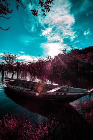 Amazonia #179