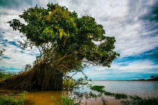Amazonia #181