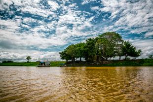 Amazonia #171