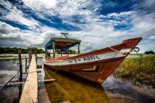 Amazonia #173