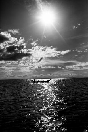 Amazonia #156