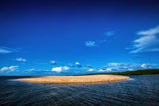Amazonia #157