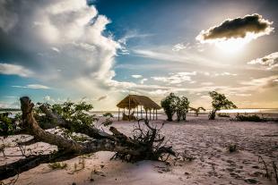 Amazonia #158