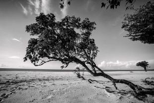 Amazonia #164