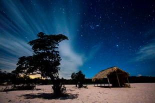 Amazonia #146