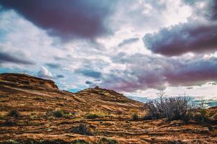 Arizona #145