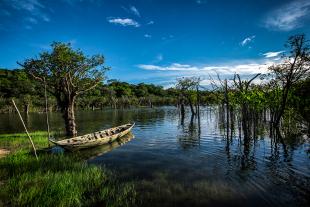 Amazonia #188
