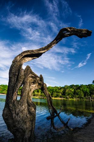 Amazonia #191