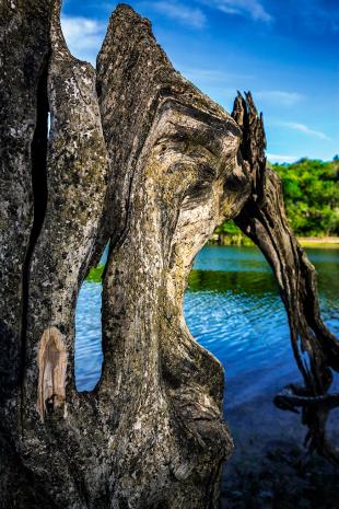 Amazonia #190