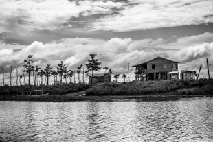 Amazonia #182