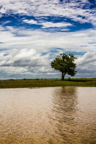 Amazonia #184