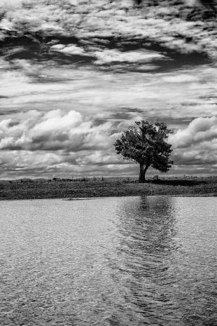 Amazonia #183