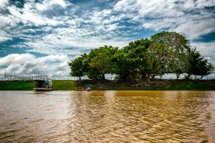 Amazonia #185