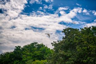 Amazonia #186