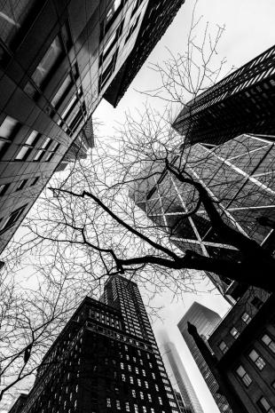New York #66