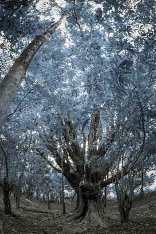Amazônia #214 (Coleção Infrared #06)