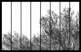 Árvore Fragmentada Arizona #02
