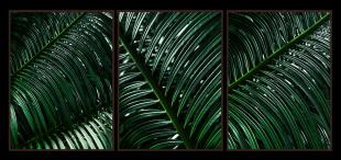 Composição Floresta Amazônica #01