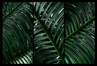 Composição Floresta Amazônica #02