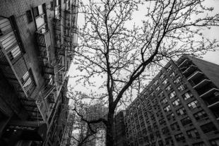 New York #135